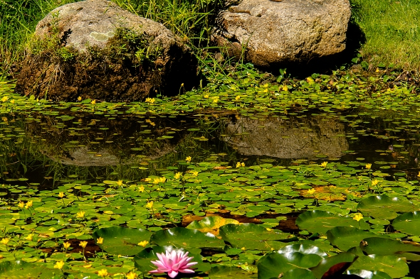 twin rocks and lily pad