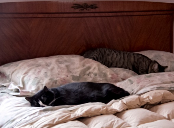 persistence of cats_2014_03_19_1